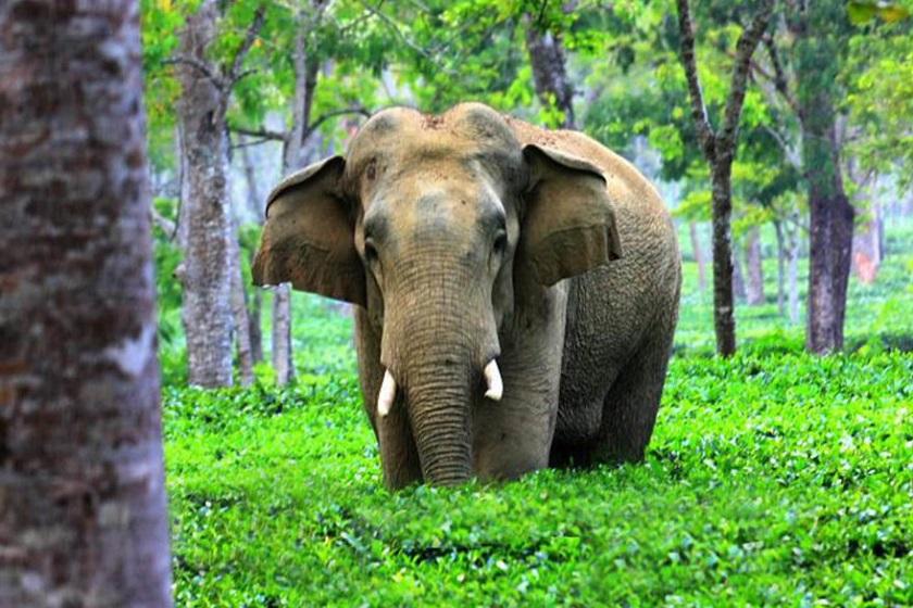 jaldapara-gorumara-priya-travels