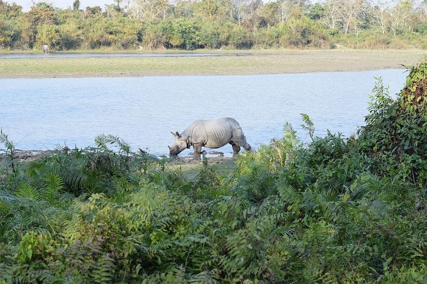 kaziranga-2n-guwahati-1n-priya travels