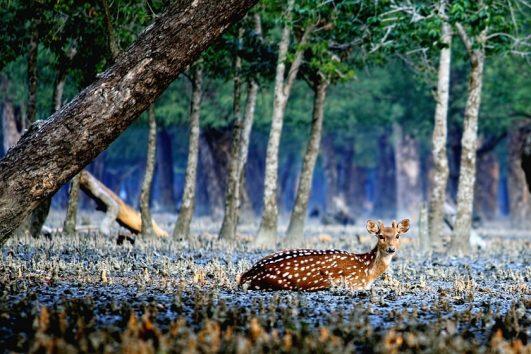sundarban-priya travels