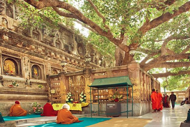bodhi-tree-priya-travels