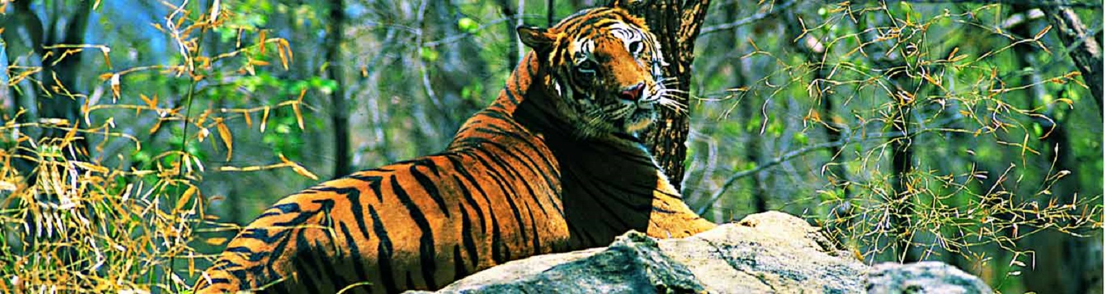 Buxa Tiger Reserve Packages