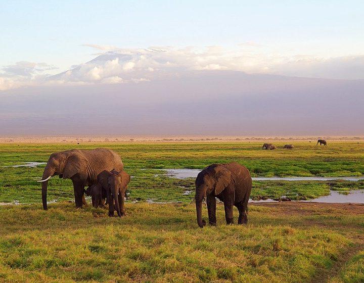 kenya-priya-travels