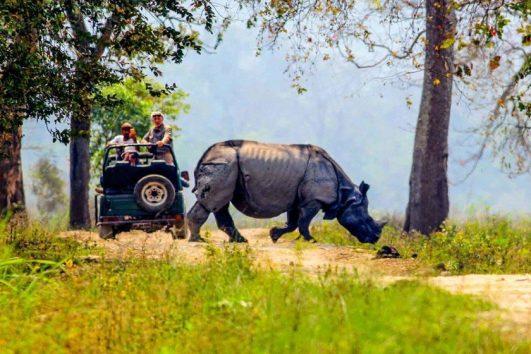 kaziranga-national-park-priya-travels