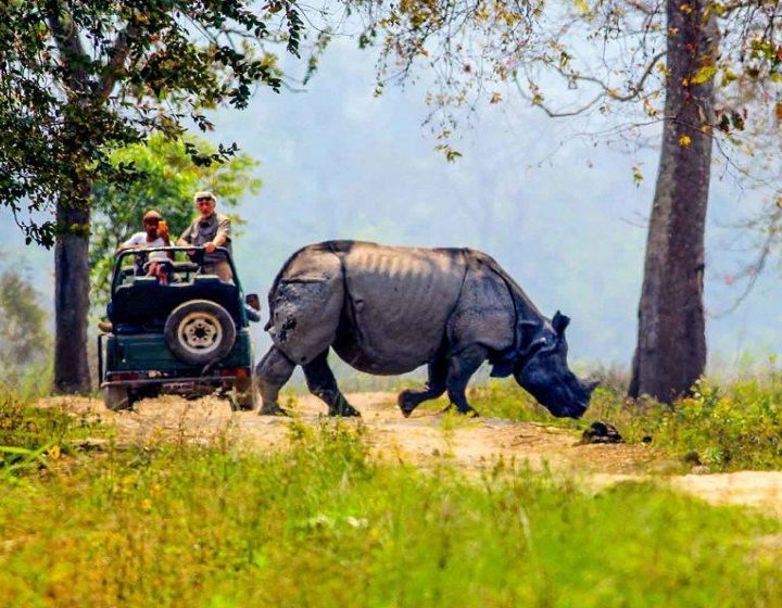 kaziranga-national-park-priya-travels