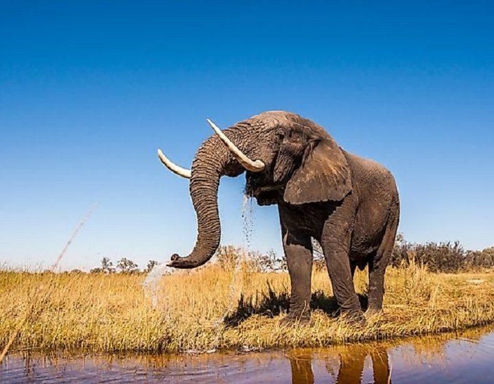 kenya-animals-priya-travels
