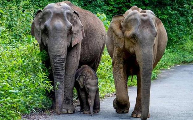 bhubaneshwar-nandan kanan zoo