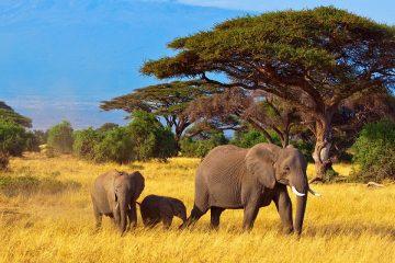 south-africa-priya-travels