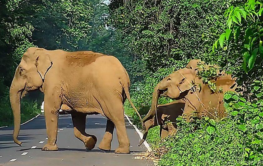 elephant-at-gorumara-priya-travels