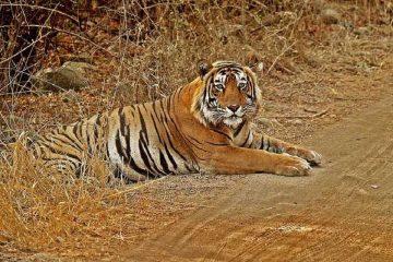 hazaribagh-national-park-priya-travels